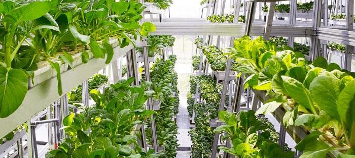 کشاورزی هوشمند در اینترنت اشیا