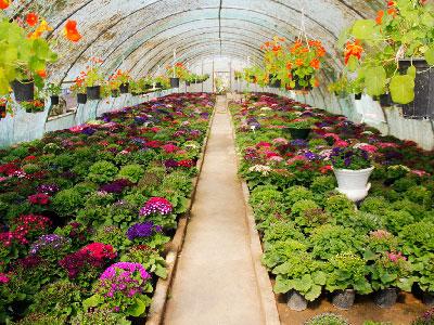 معماری-گلخانه-هوشمند-چگونه-است